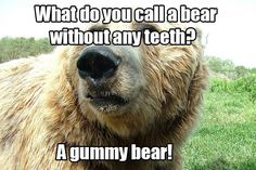 Make Me Laugh Monday (bears)